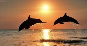 delfini-al-tramonto